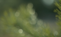 An out of focus shot of plants.