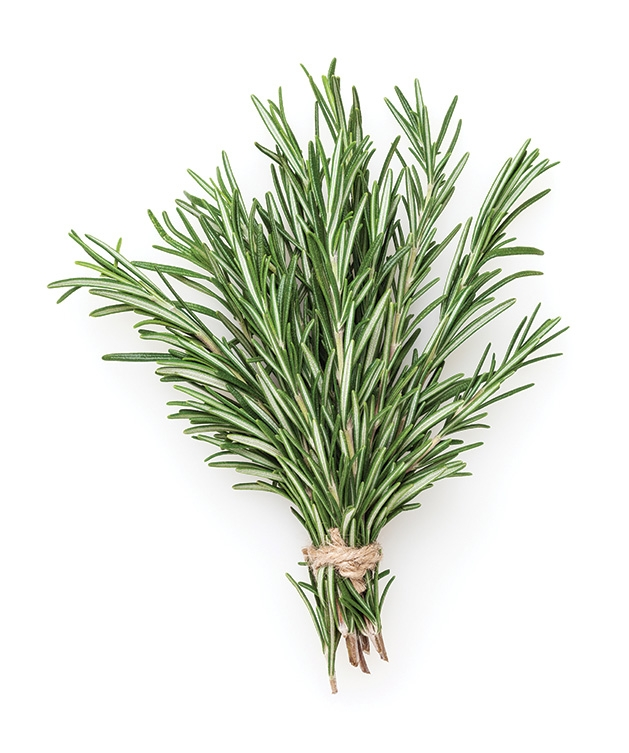 A plant from Costa Produce Farm & Greenhouse