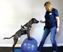 Rita Tretter of Canine Revival works out a dog.